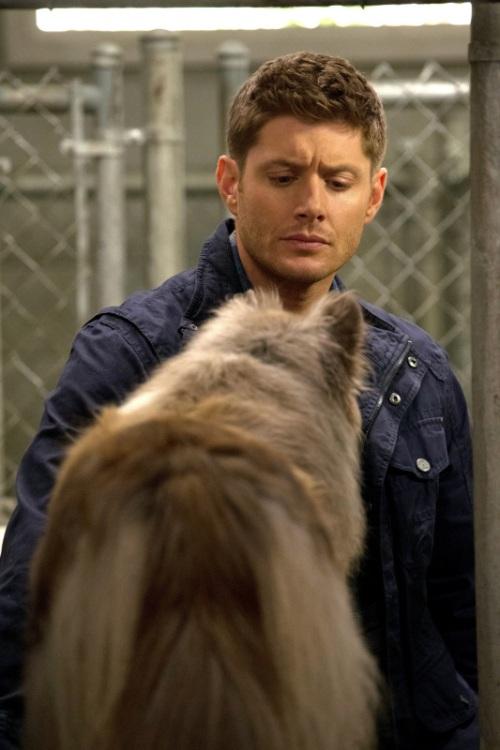 Dog Dean Afternoon